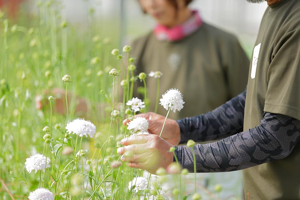 花の魅力をより高めるために