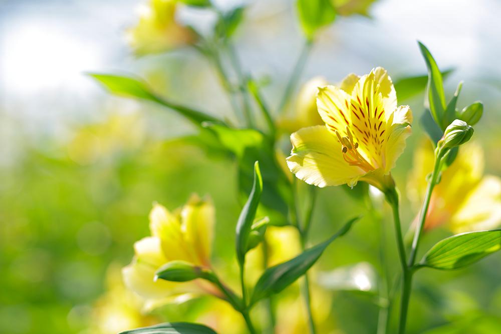 花が育ちやすい環境を整えるために。