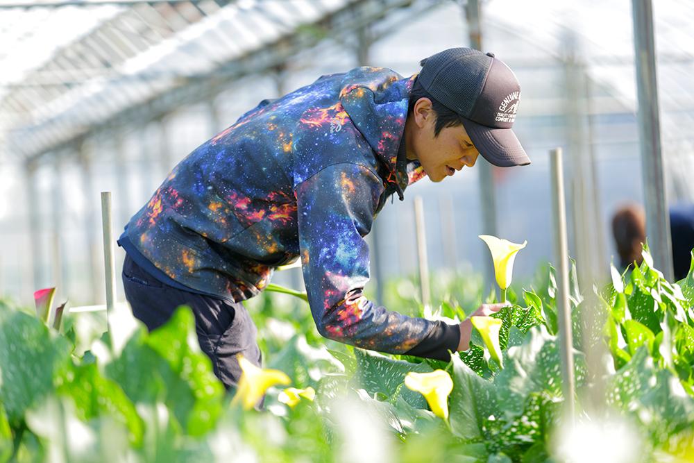 繊細な花を丹精込めて育てる。