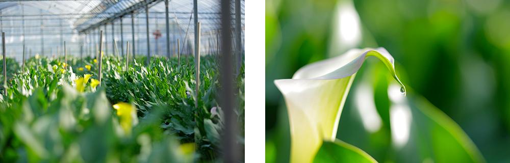 江頭農園のカラーを飾って、オフィスを華やかで優しい空間に。