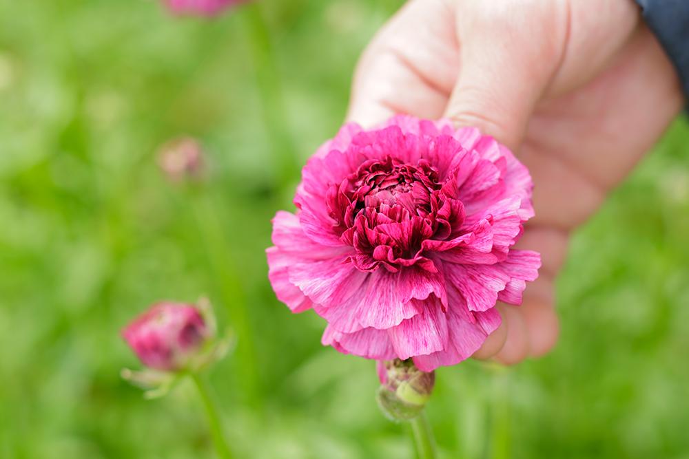個性が溢れる、ユニークな花姿。