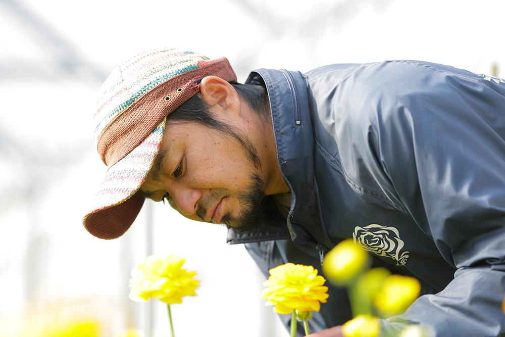 徹底した肥培管理と温度管理。