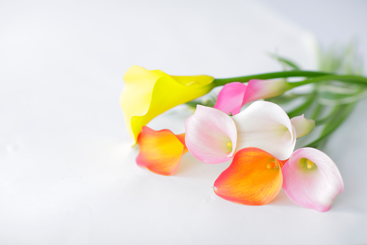 旬のお花をオフィスにお届けるサービス「はなしことば」